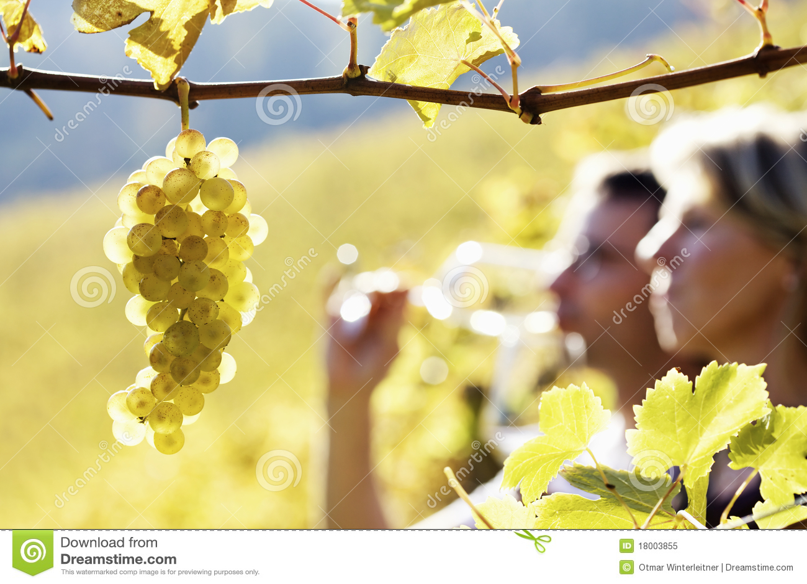 夫妇品尝葡萄园酒