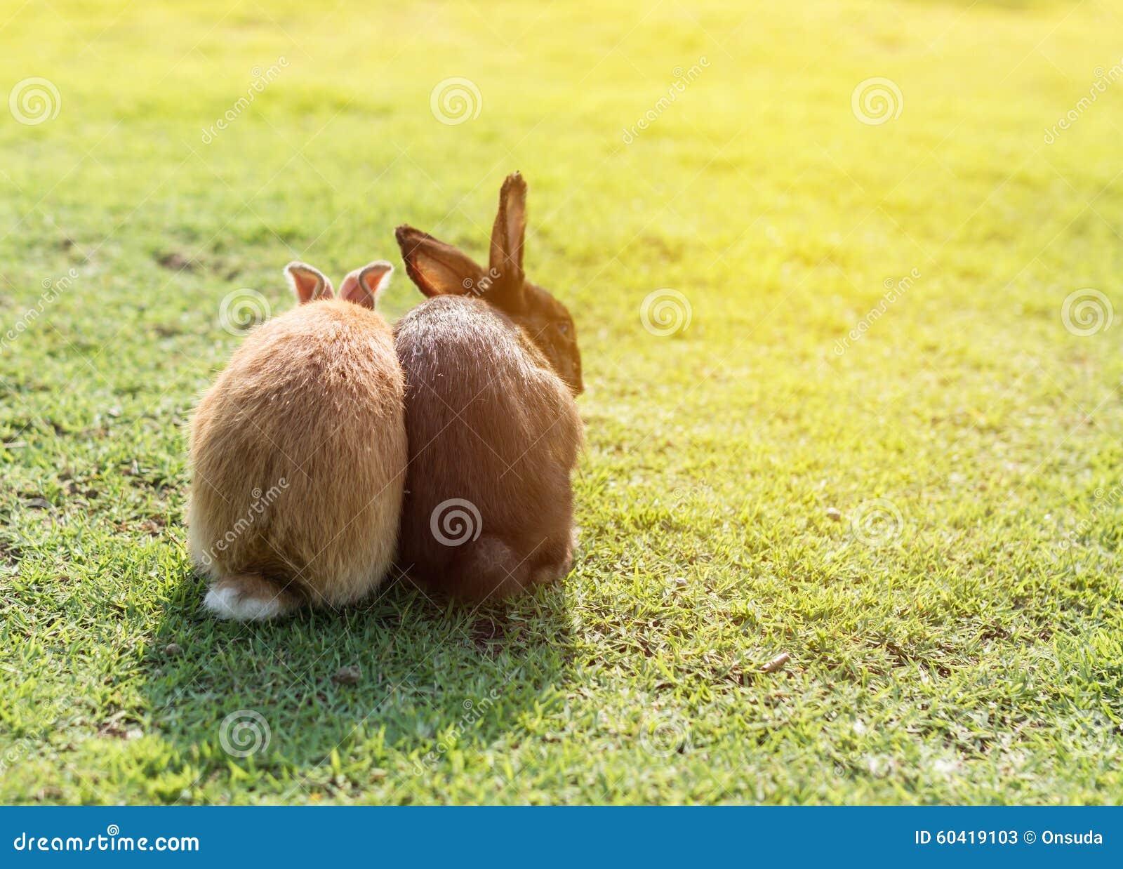 夫妇糖果兔子