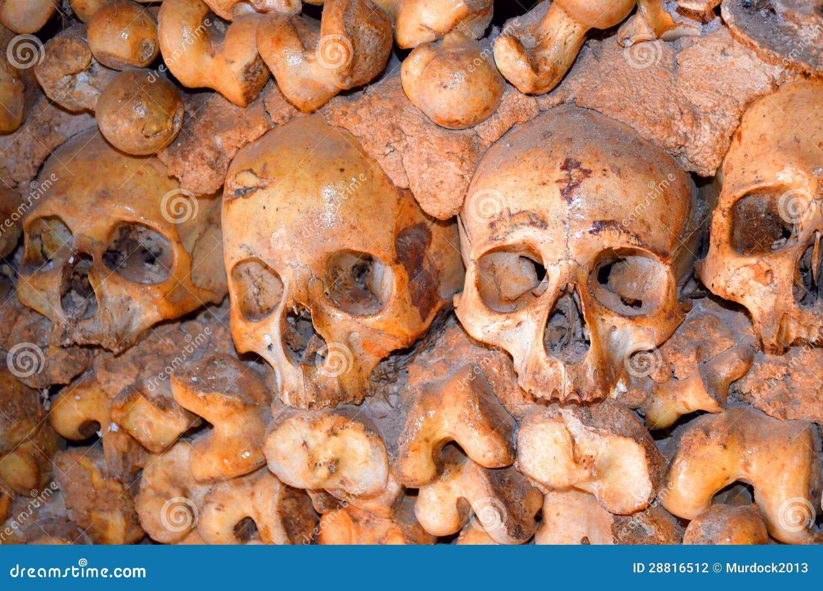 头骨和骨头