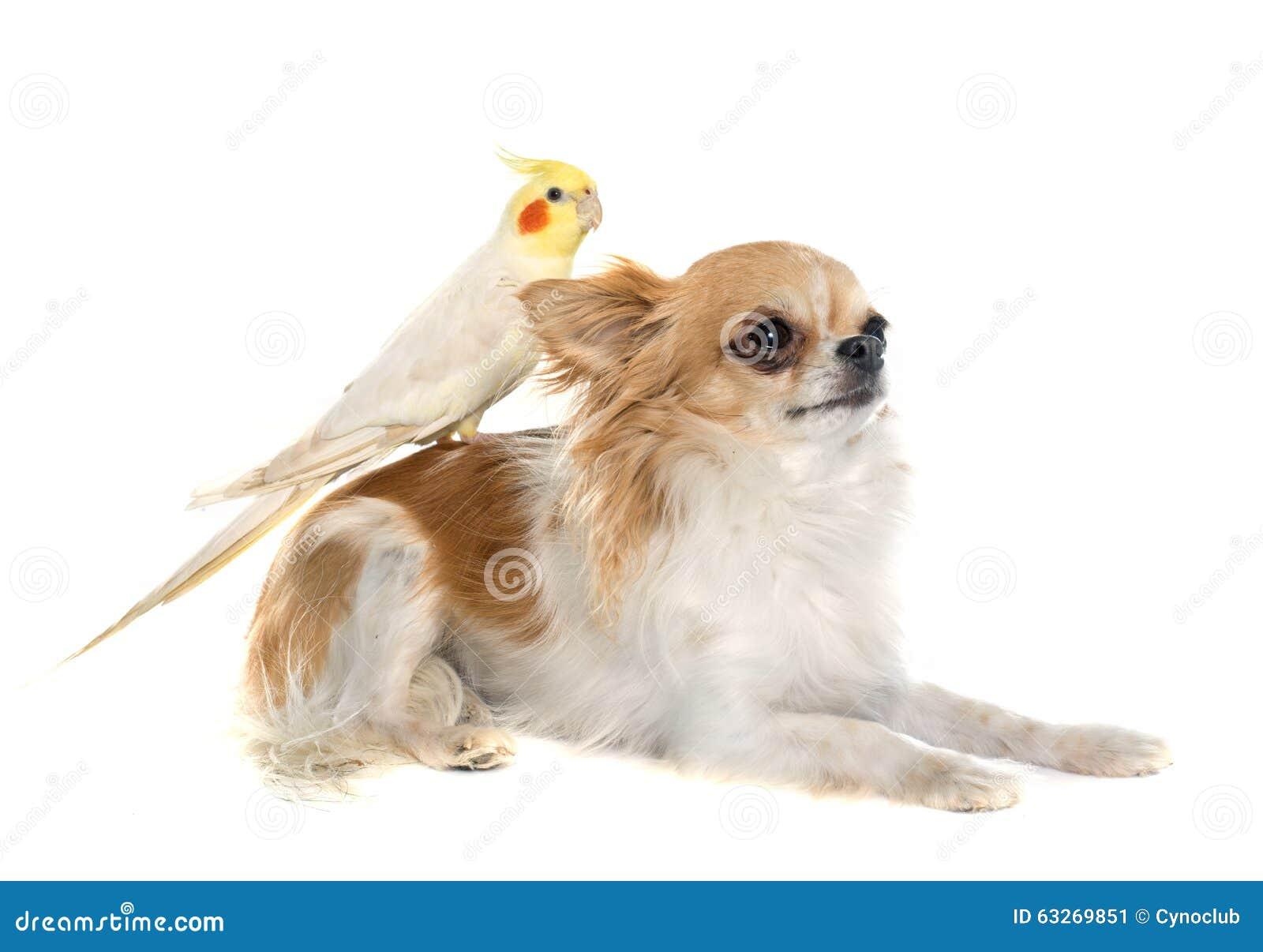 女人和狗配动态囹�a_鹦鹉和狗都tm恋爱了,我却还是单身!视频