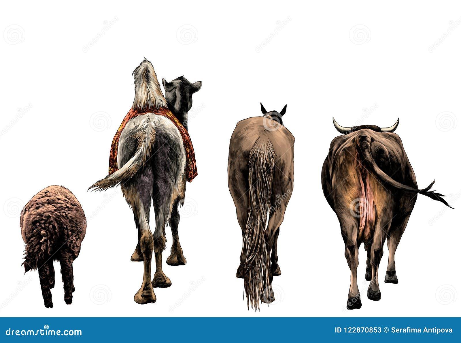 套从绵羊骆驼马的后面动物和母牛和驴子继续