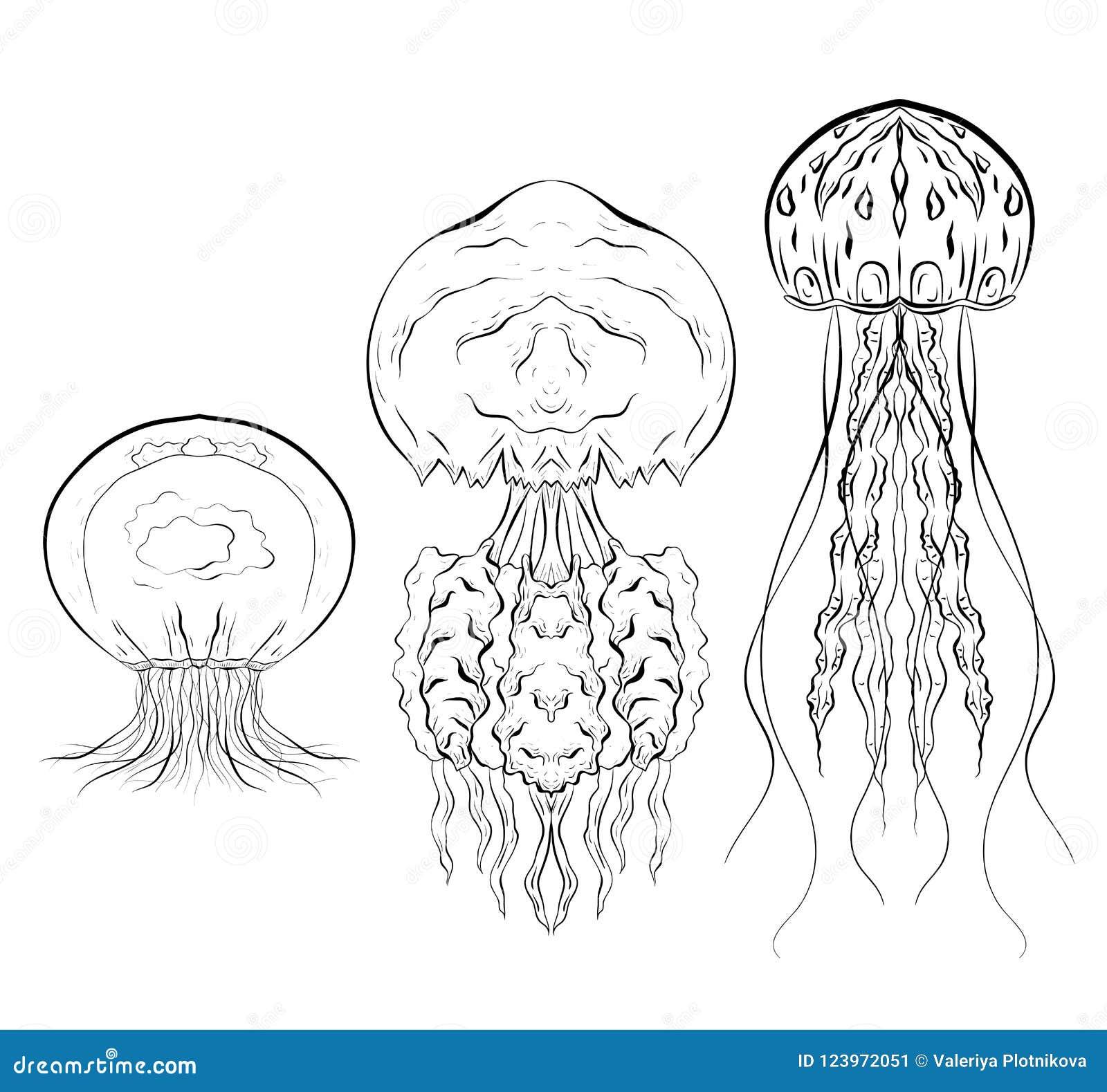 套水母的等高黑白例证 对象是分别于背景