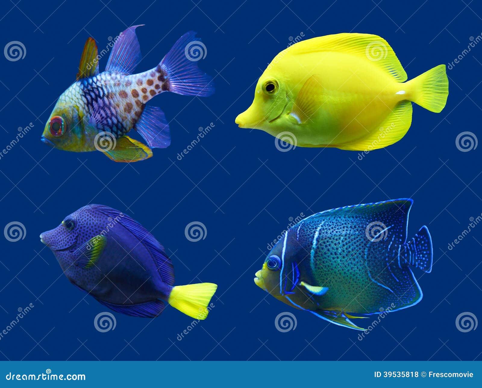 套热带鱼.隔绝在蓝色.hight res.图片