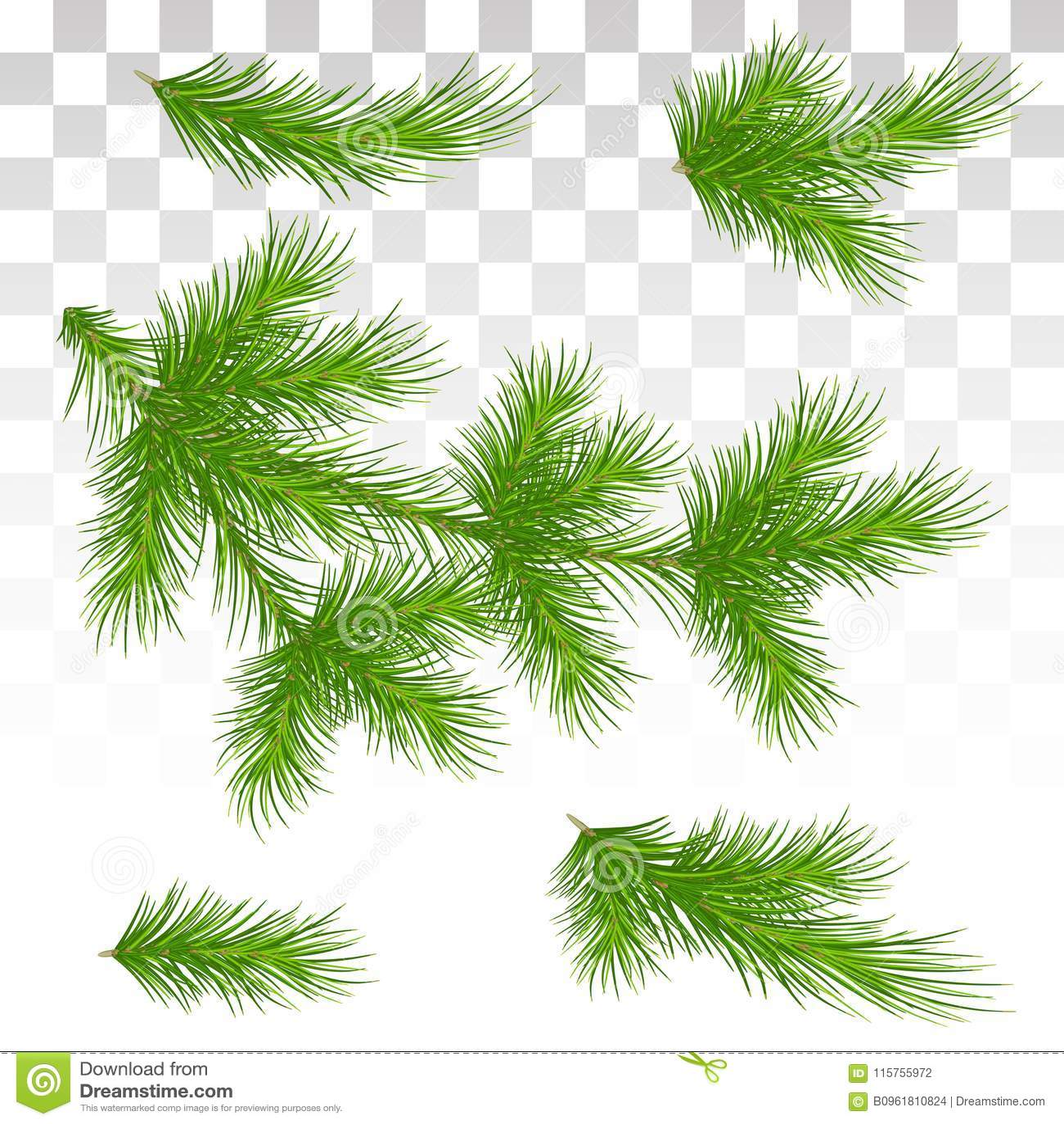 套绿色杉木分支 查出 圣诞节 装饰 Chri