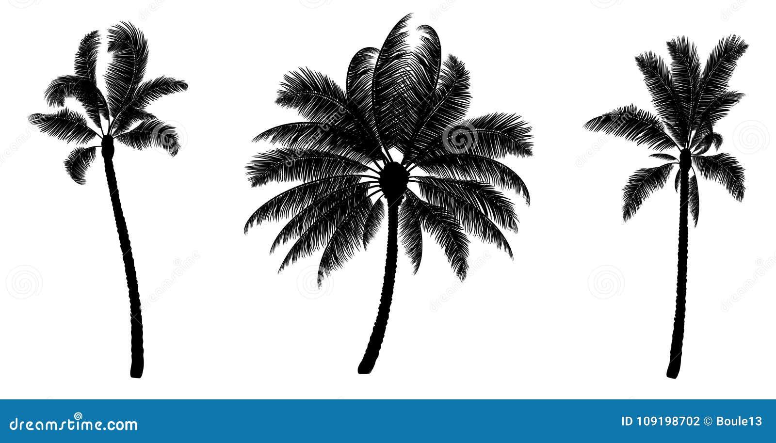 套黑传染媒介棕榈 拉长的现有量结构树