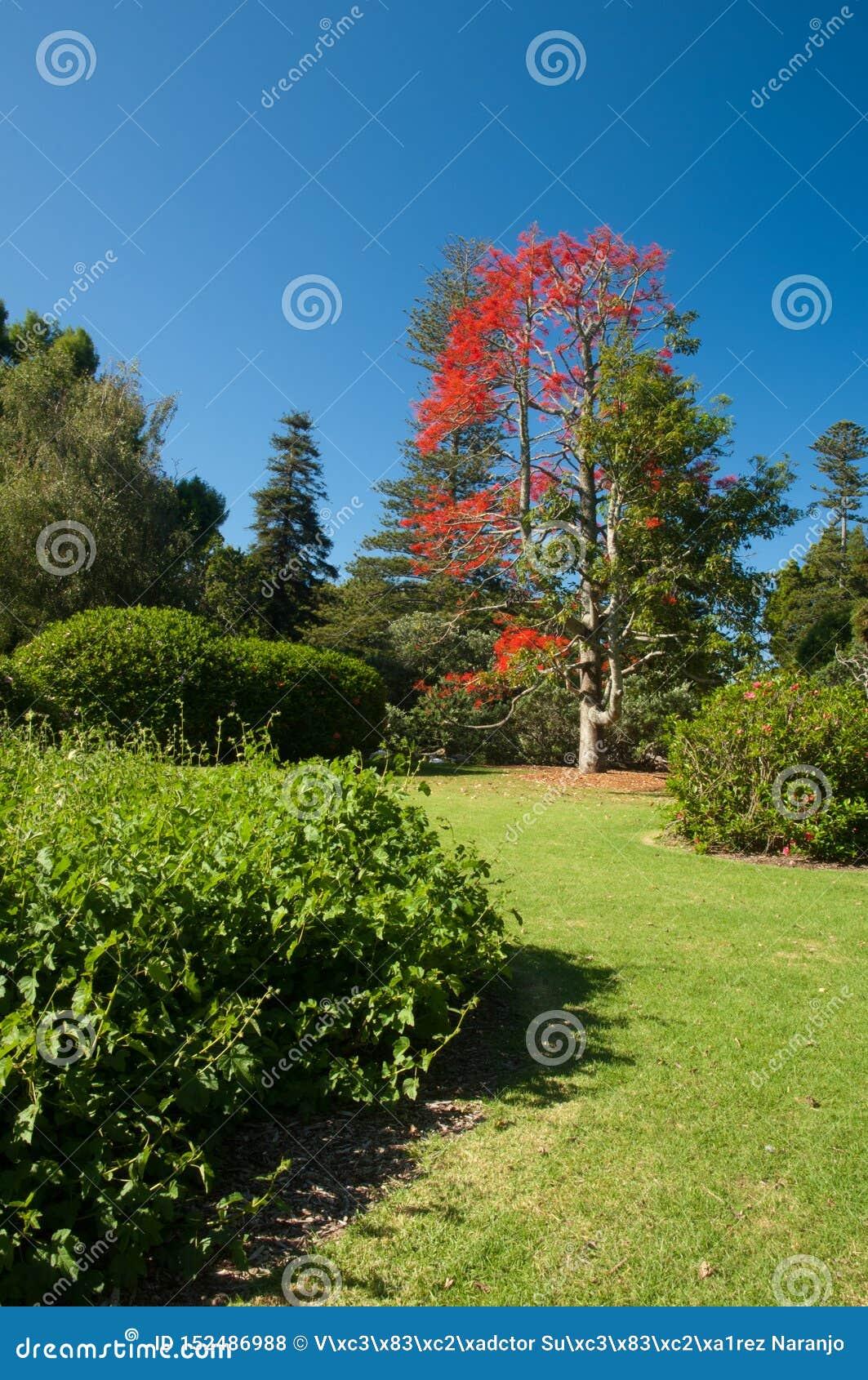 奥克兰领域的庭院