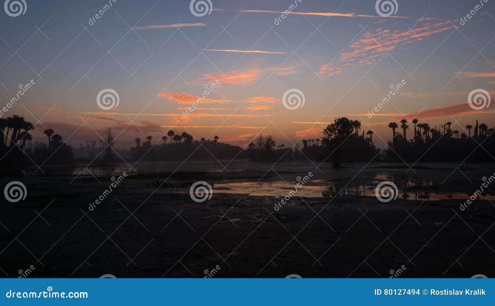 奥兰多沼泽地