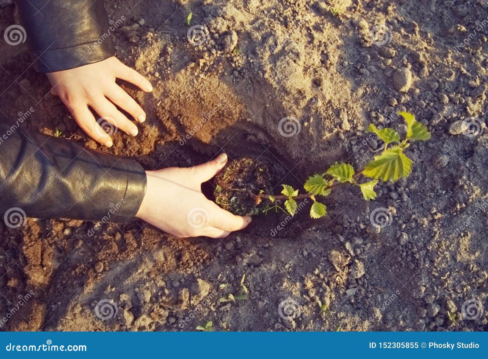女孩种植一棵年轻树
