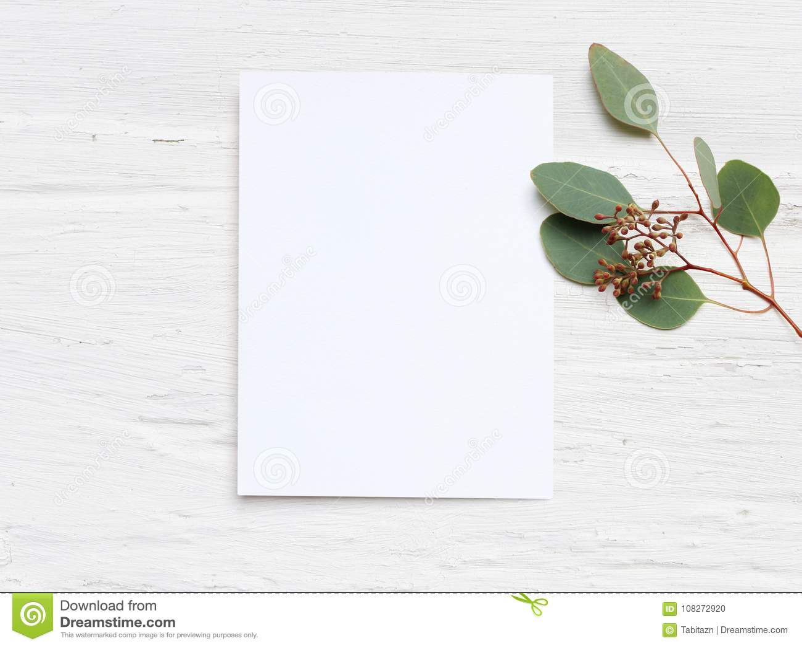 女性与白纸卡片的婚礼桌面大模型和玉树杨属在白色破旧的桌背景分支