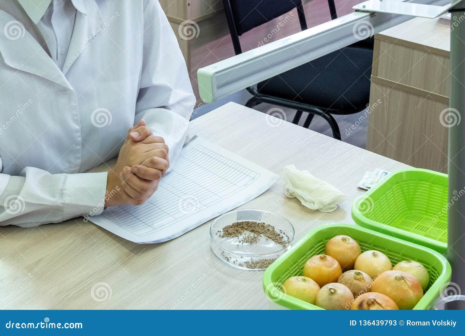 女性实验室手在锁一起被堆 在培养皿的茴香籽 在一个绿色杯子的葱 概念健康生活方式