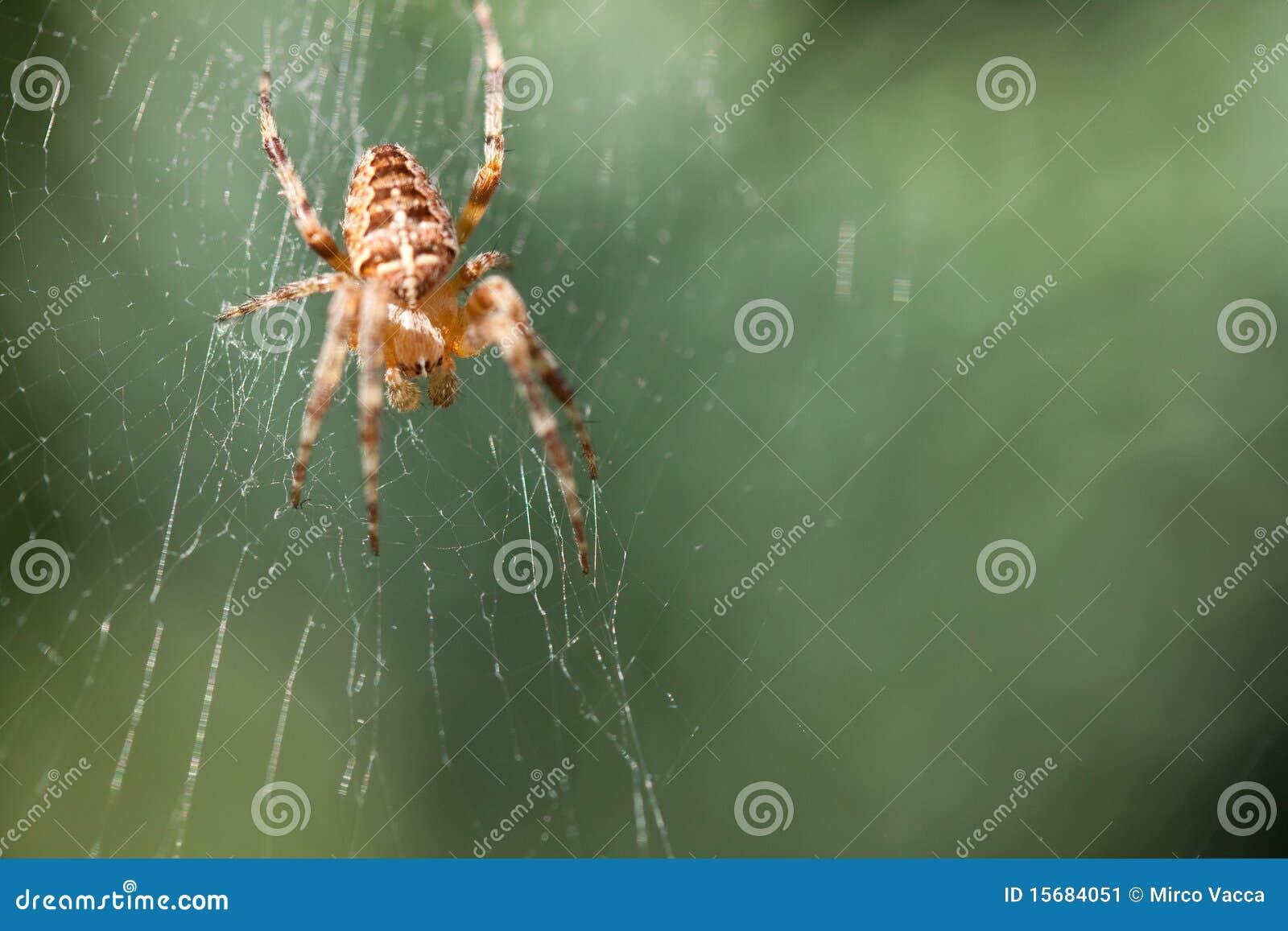 她的蜘蛛网