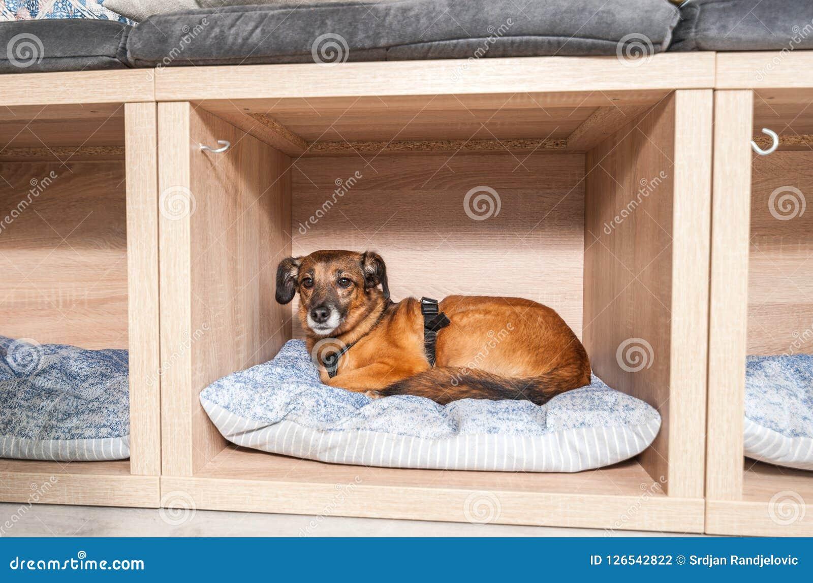 好人和谎言采取的被放弃的无家可归的狗在一个舒适的软的坐垫在宠物店