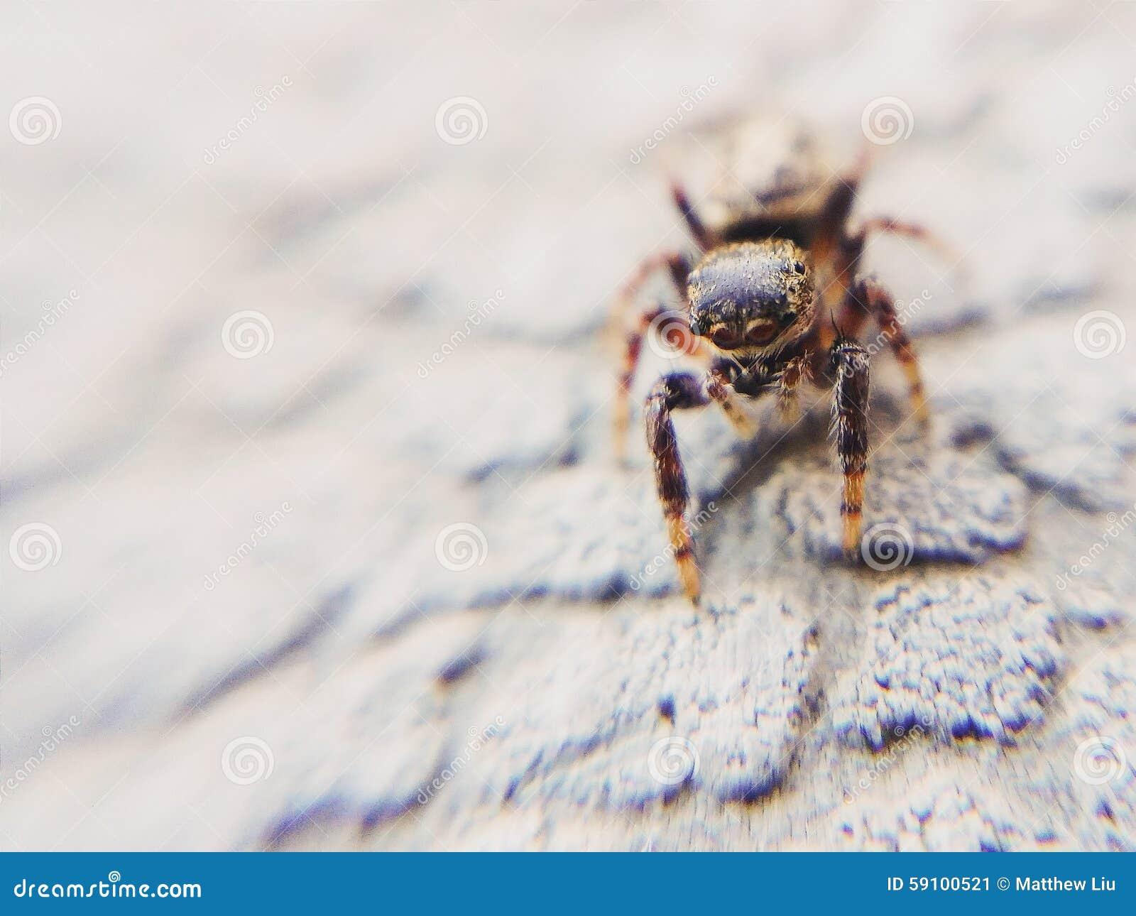 好奇漫步的跳跃的蜘蛛