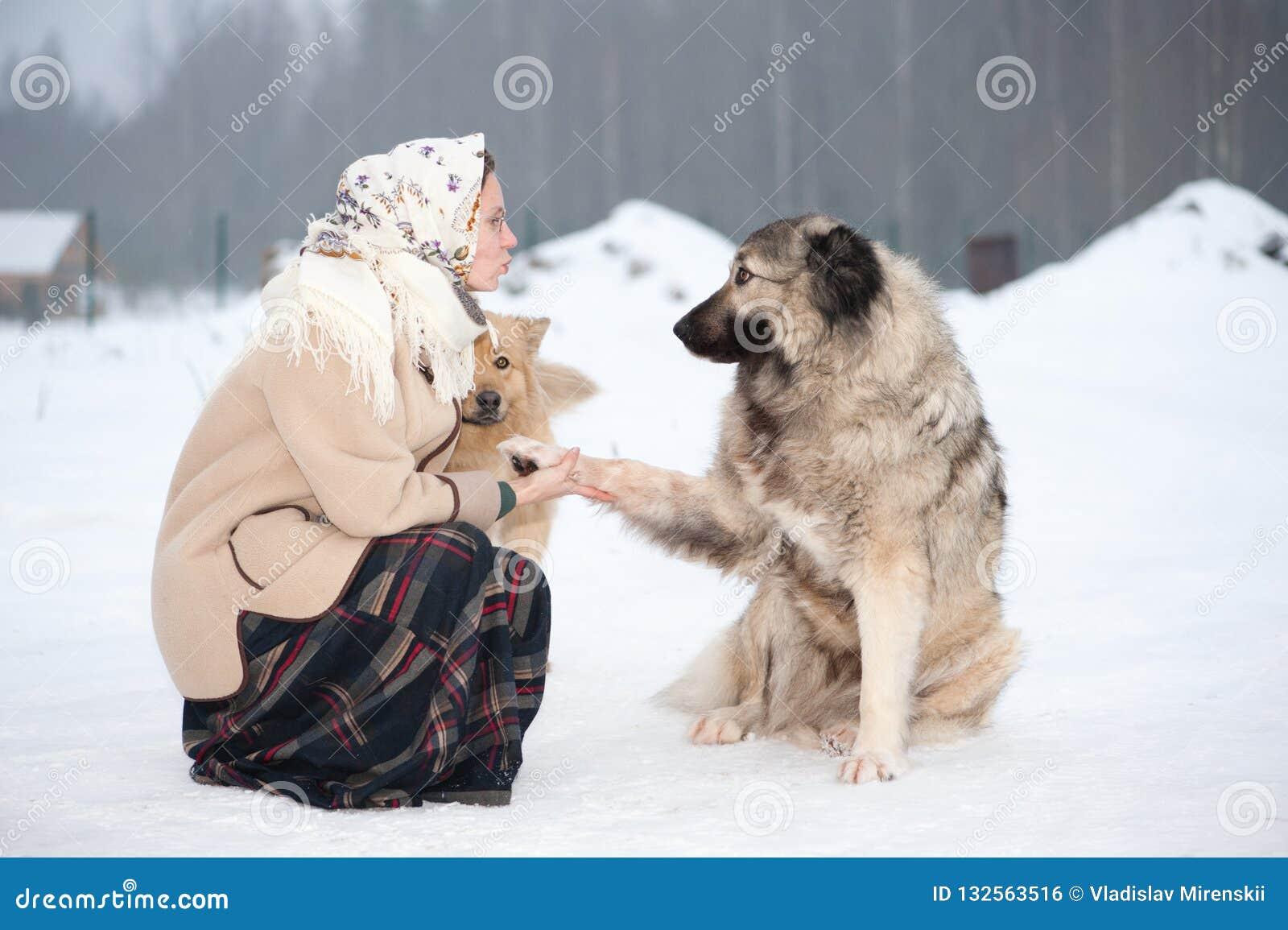 妇女在公园训练白种人牧羊人和围场狗在多雪的地面
