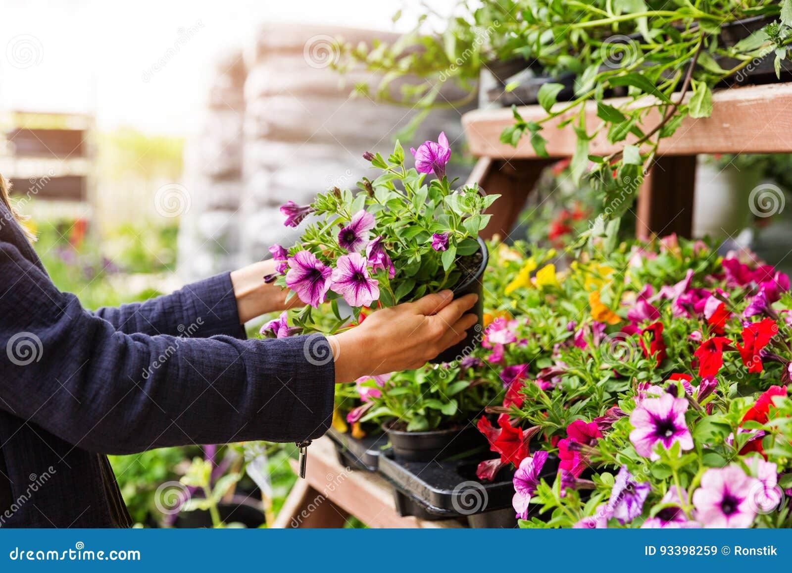 妇女在庭园花木托儿所商店选择喇叭花花