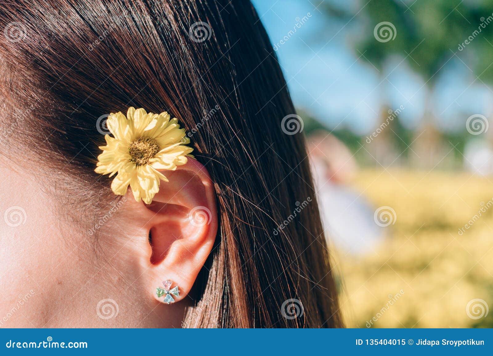 妇女在耳朵的菊花花
