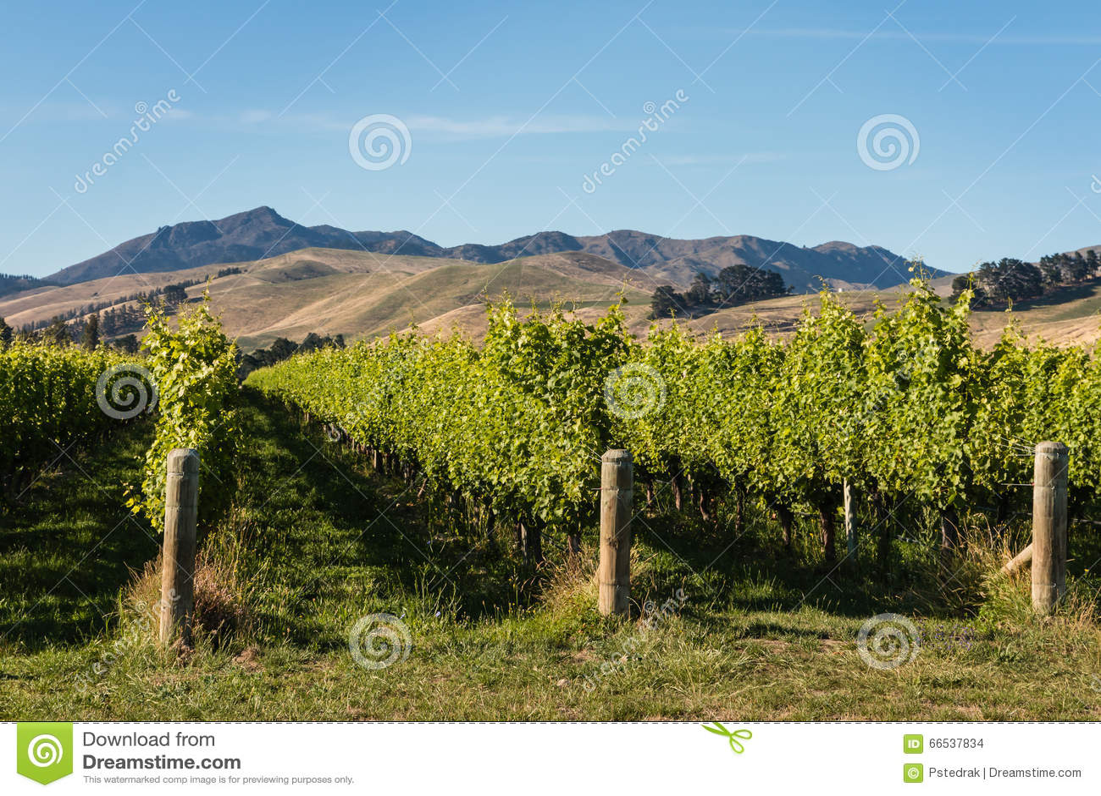 威瑟小山的,新西兰葡萄园