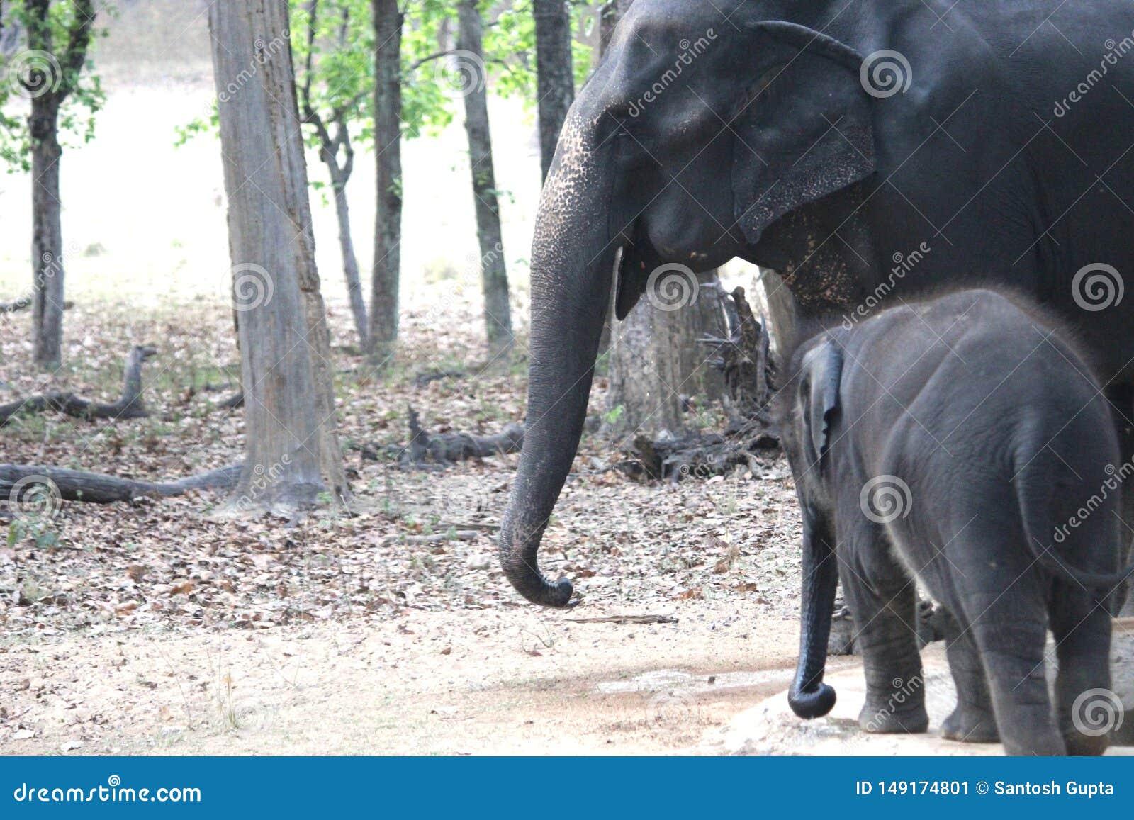 婴孩和母亲大象