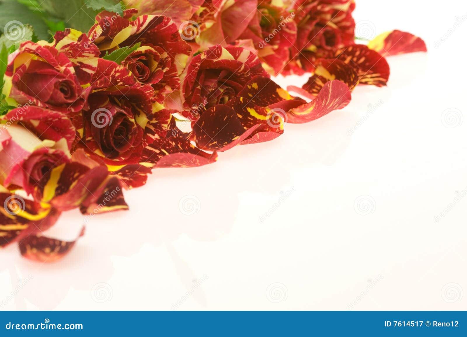嫉妒爱激情玫瑰