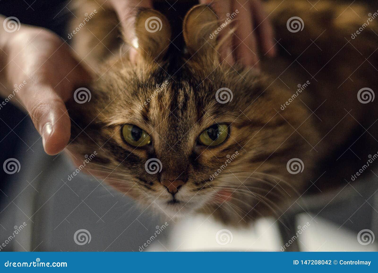 嬉戏的神色猫