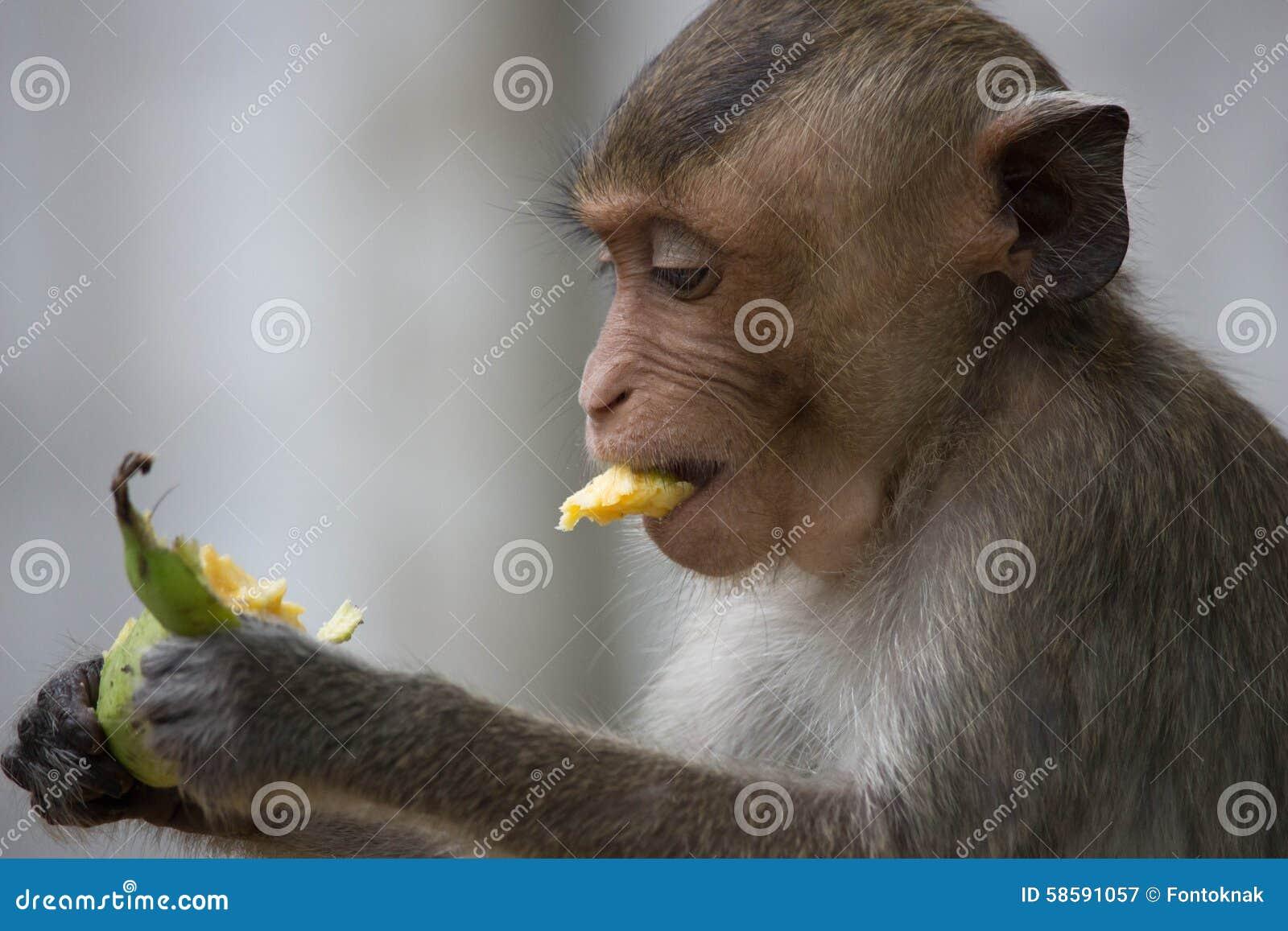 猴子囹�!��:d�yc!y�+�.�9.b9�c9kd_猴子在泰国的一个自然森林里吃着.