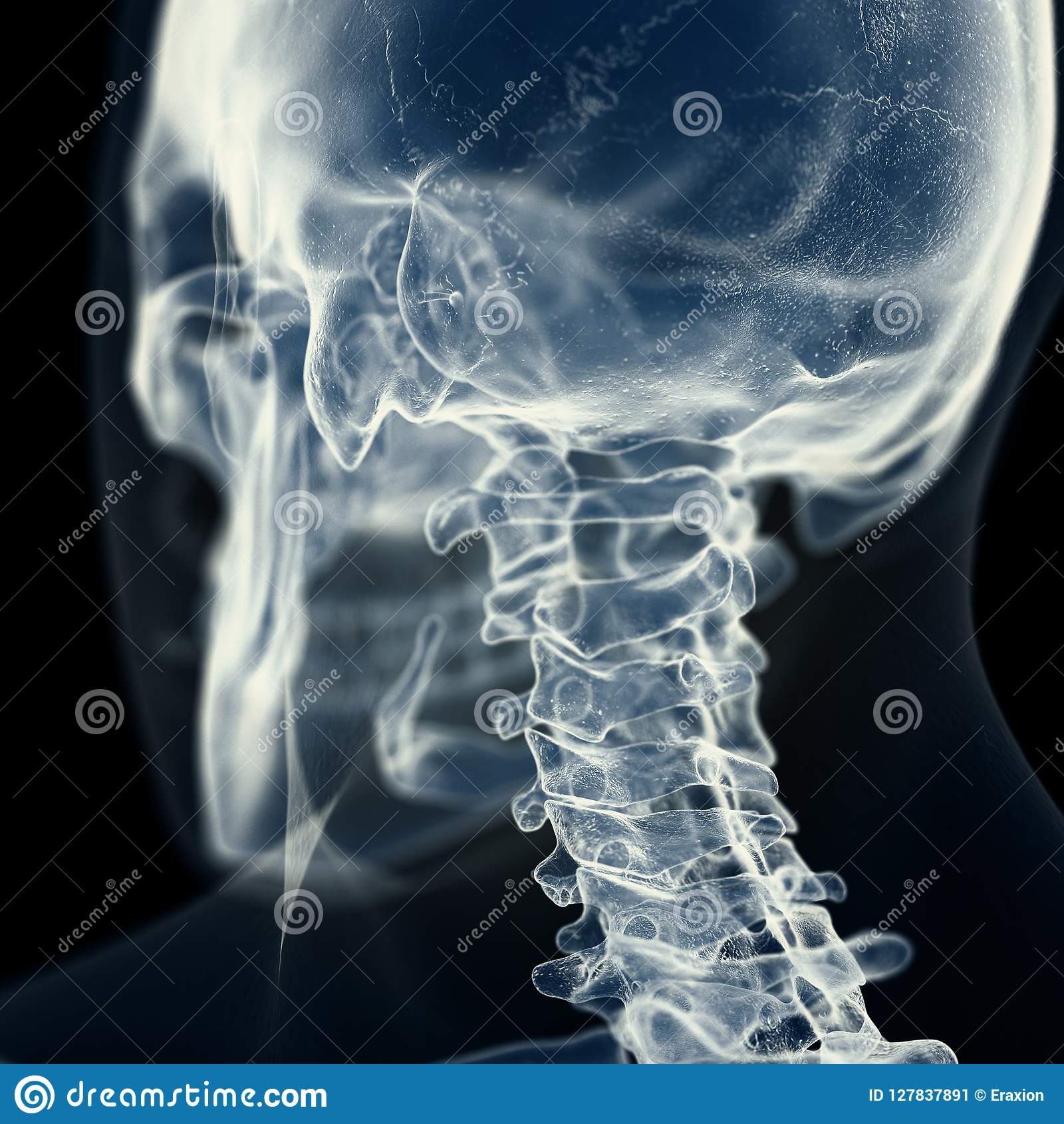 子宫颈脊椎