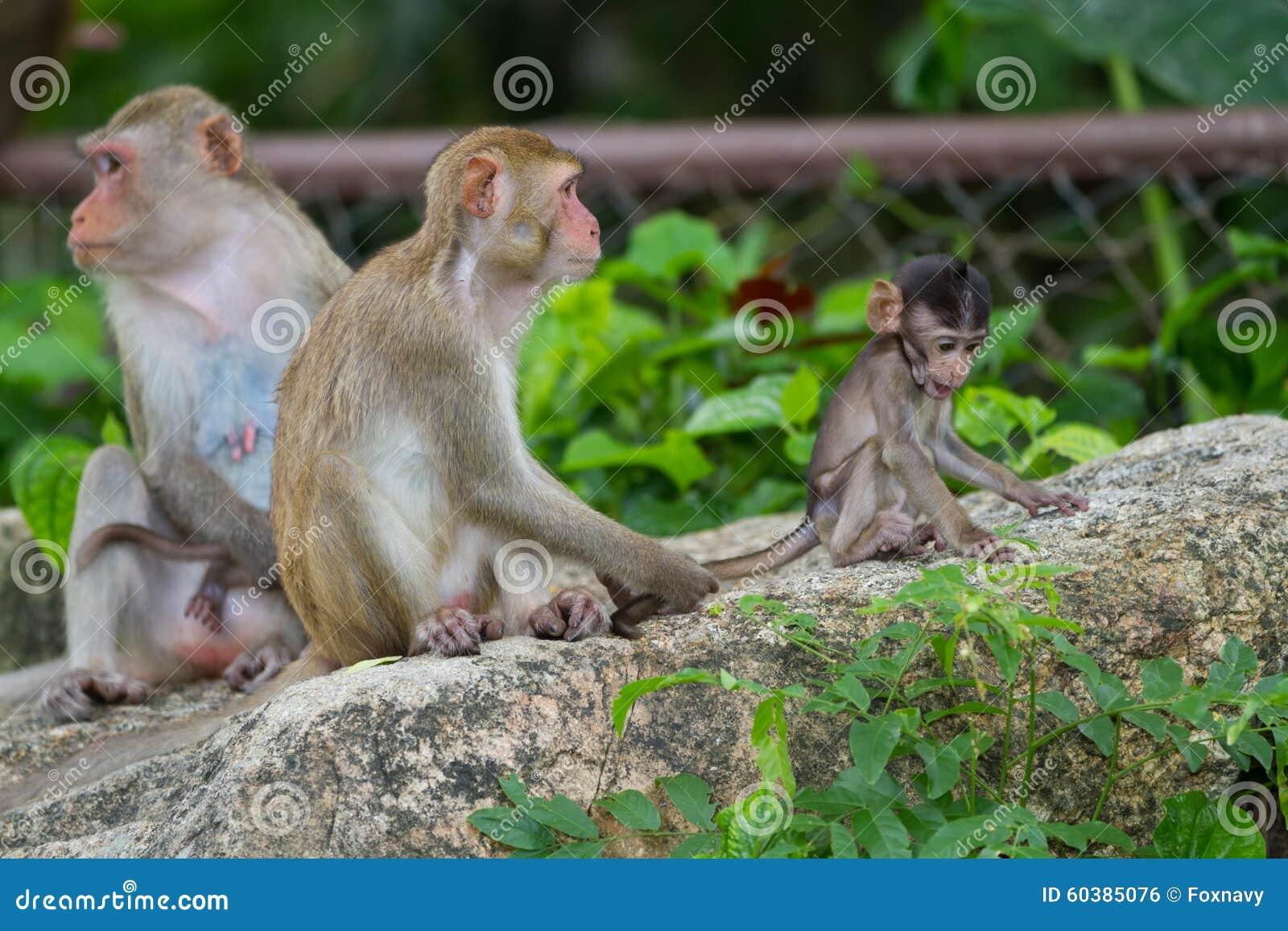 猴子囹�!��:d�yc!y�+�.�9.b9�c9kd_猴子的图片在野生生物的.