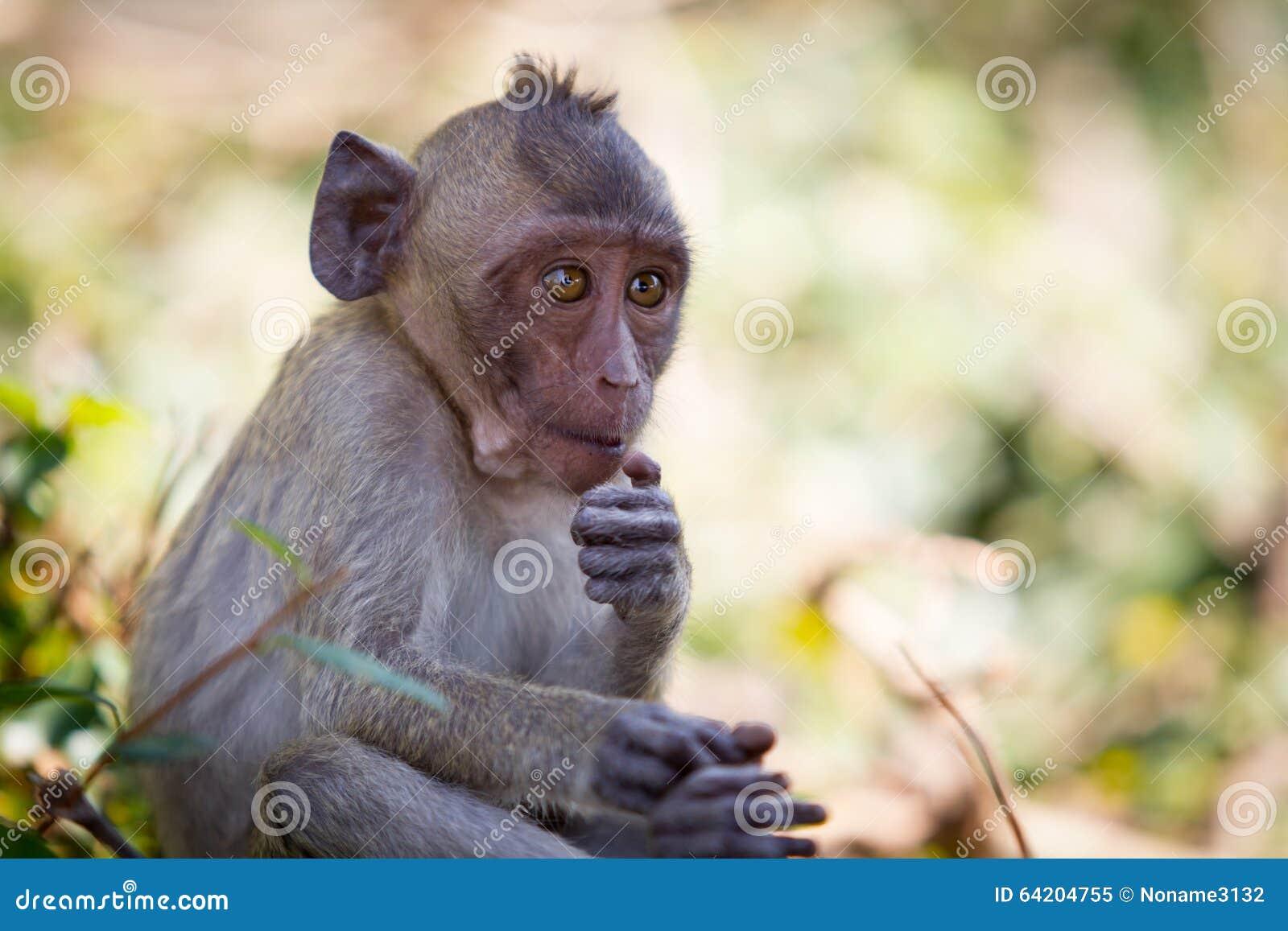猴子囹�!��:d�yc!y�+�.�9.b9�c9kd_猴子