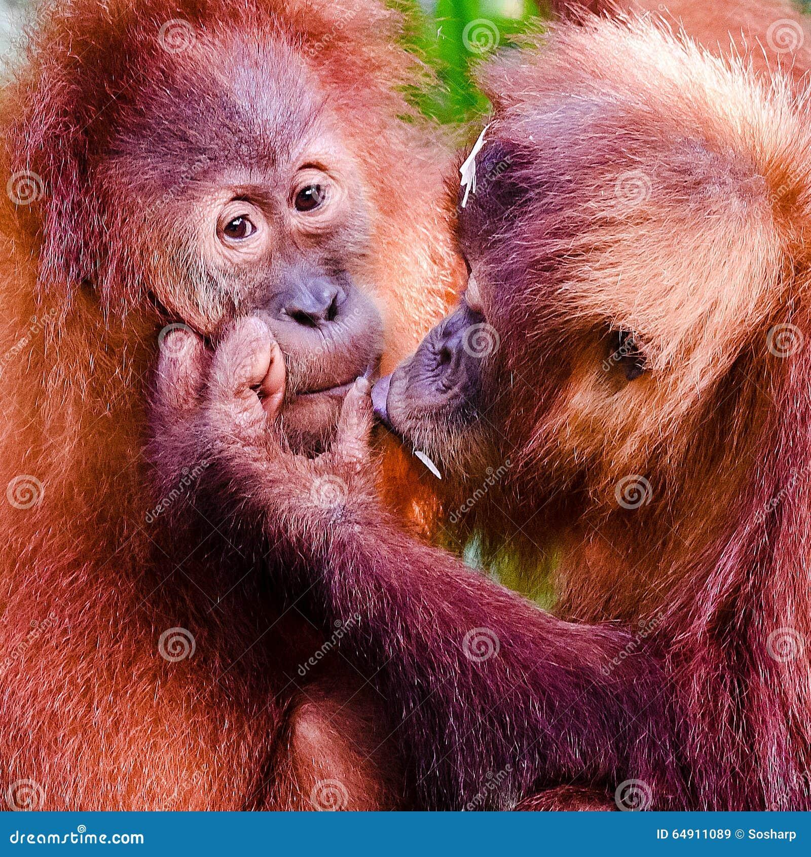 中国猴子种类_猴子年,中国黄道带,中国日历.