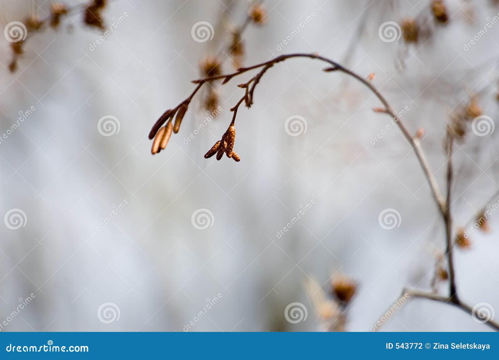 Download 孑然冬天 库存照片. 图片 包括有 绝望, 孤独, 孑然, 虚拟, 杨柳, 本质, 消沉, 生活, 全能, 放弃了 - 543772