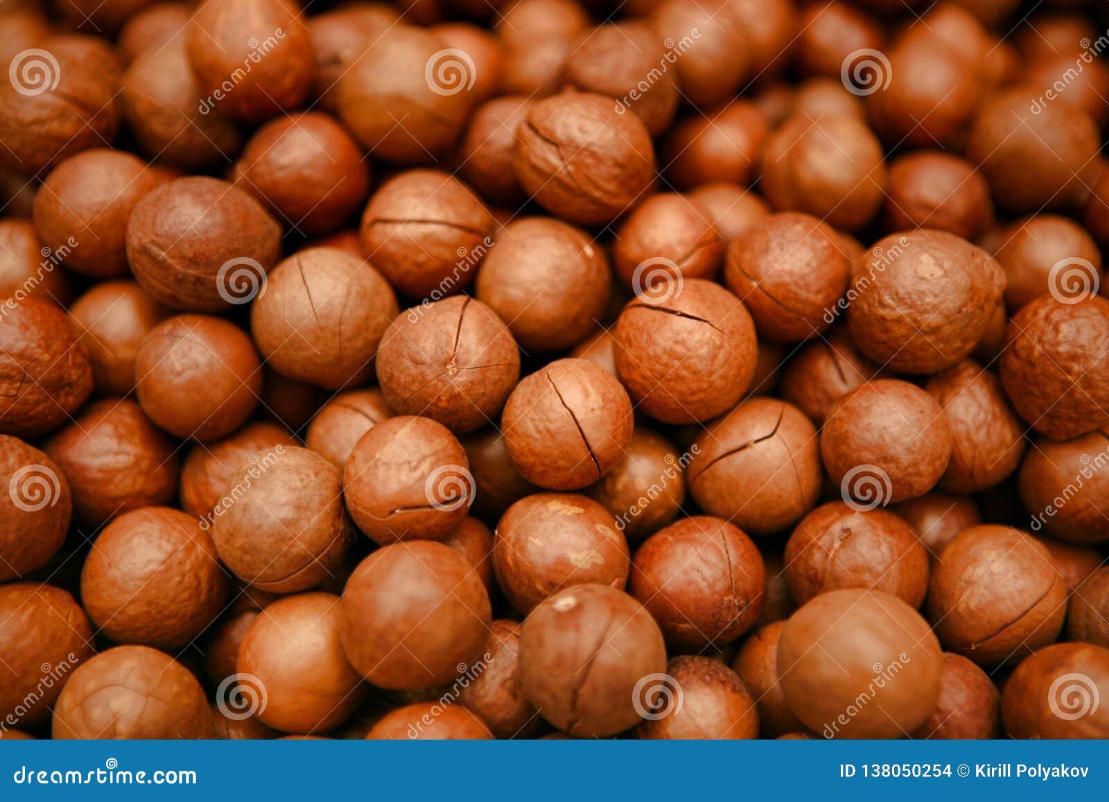 存放人其中一枚最可贵的坚果在世界上-马卡达姆坚果