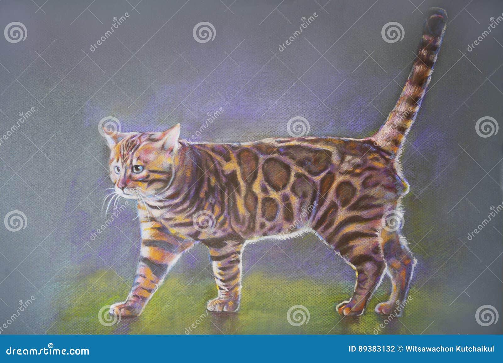 绘画孟加拉猫