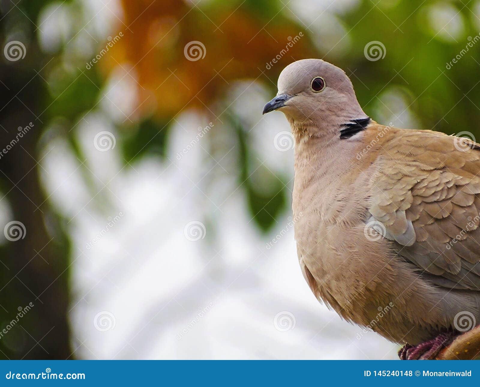 孤独的鸟在巴塞罗那在春天