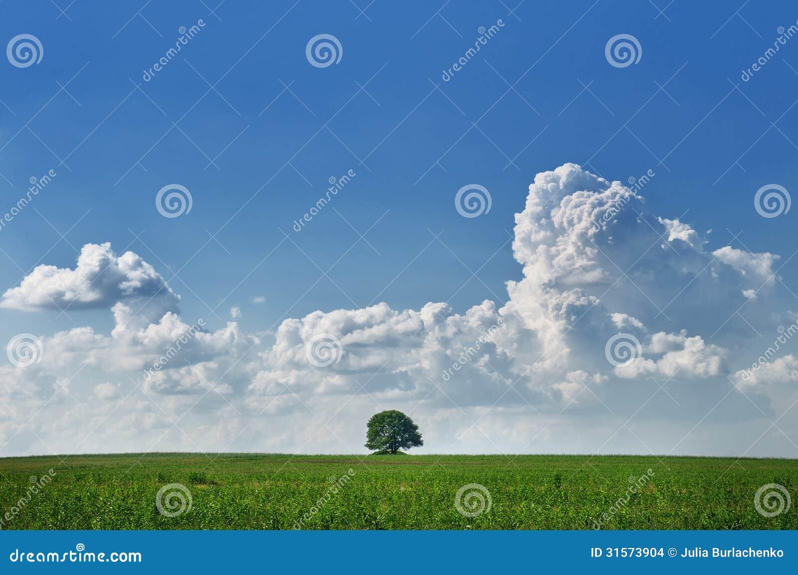 苹果美化与在天空的绘制树与积云和环境.creo3.0领域孤立图片