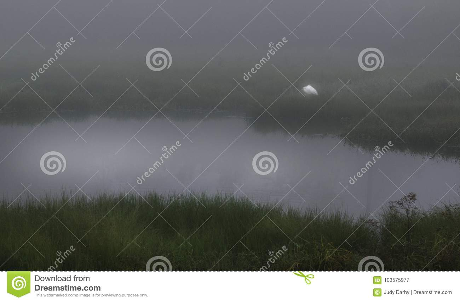 孤立白鹭在格斯特海岛路易斯安那输入雾