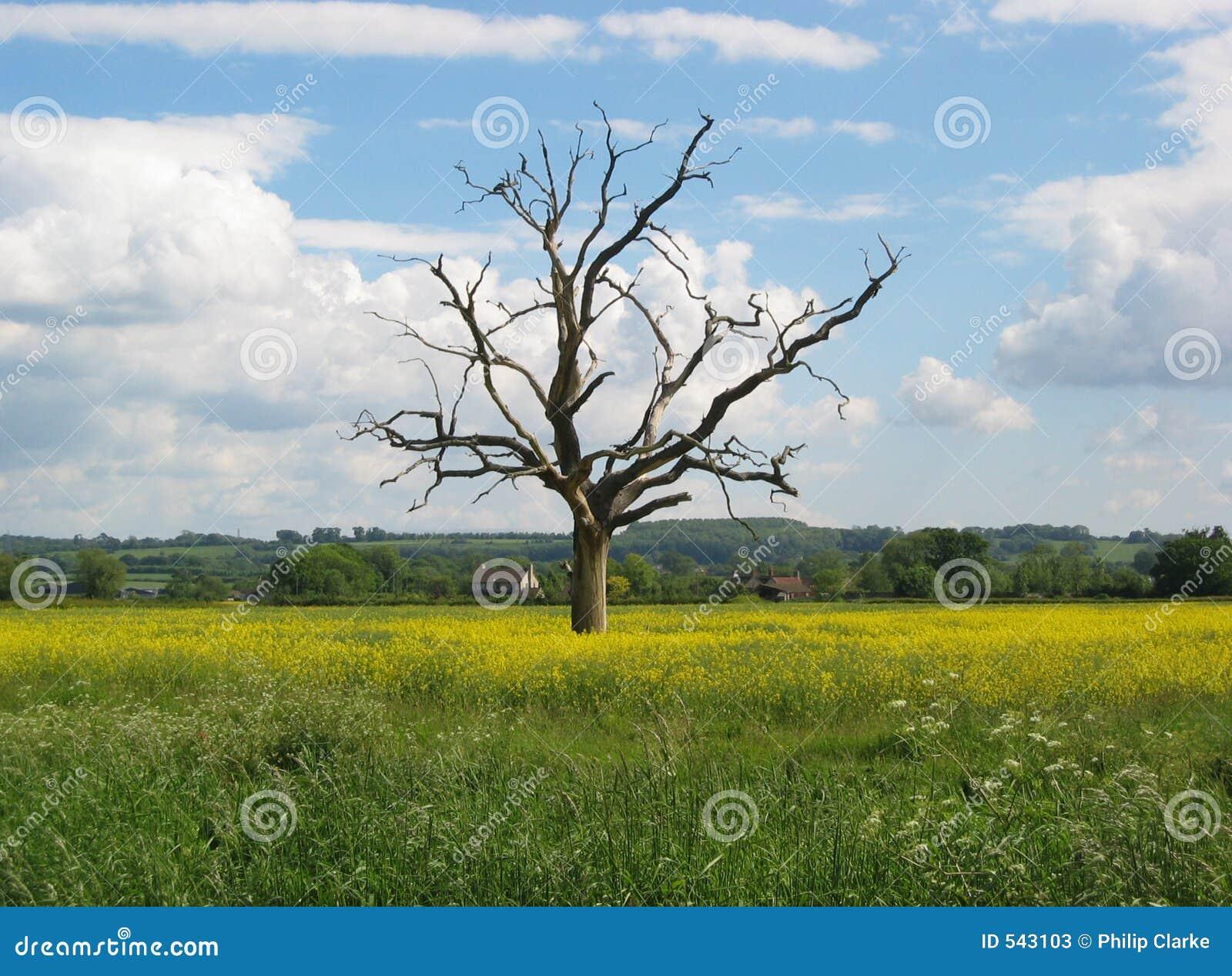 Download 孤立结构树 库存图片. 图片 包括有 横向, 夏天, 结构树, 草甸, 天空, 云彩, 毛茛 - 543103