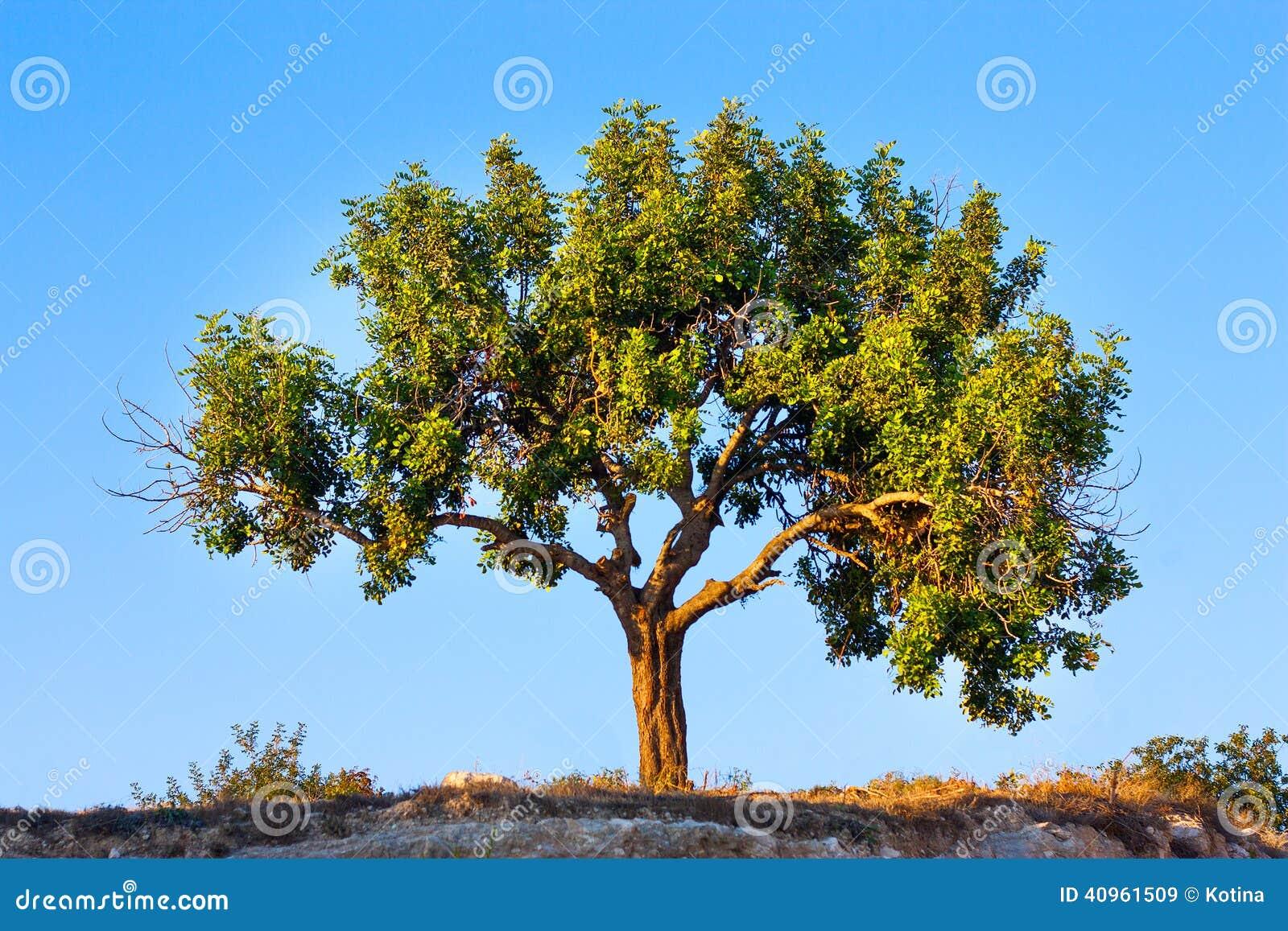 孤立结构树