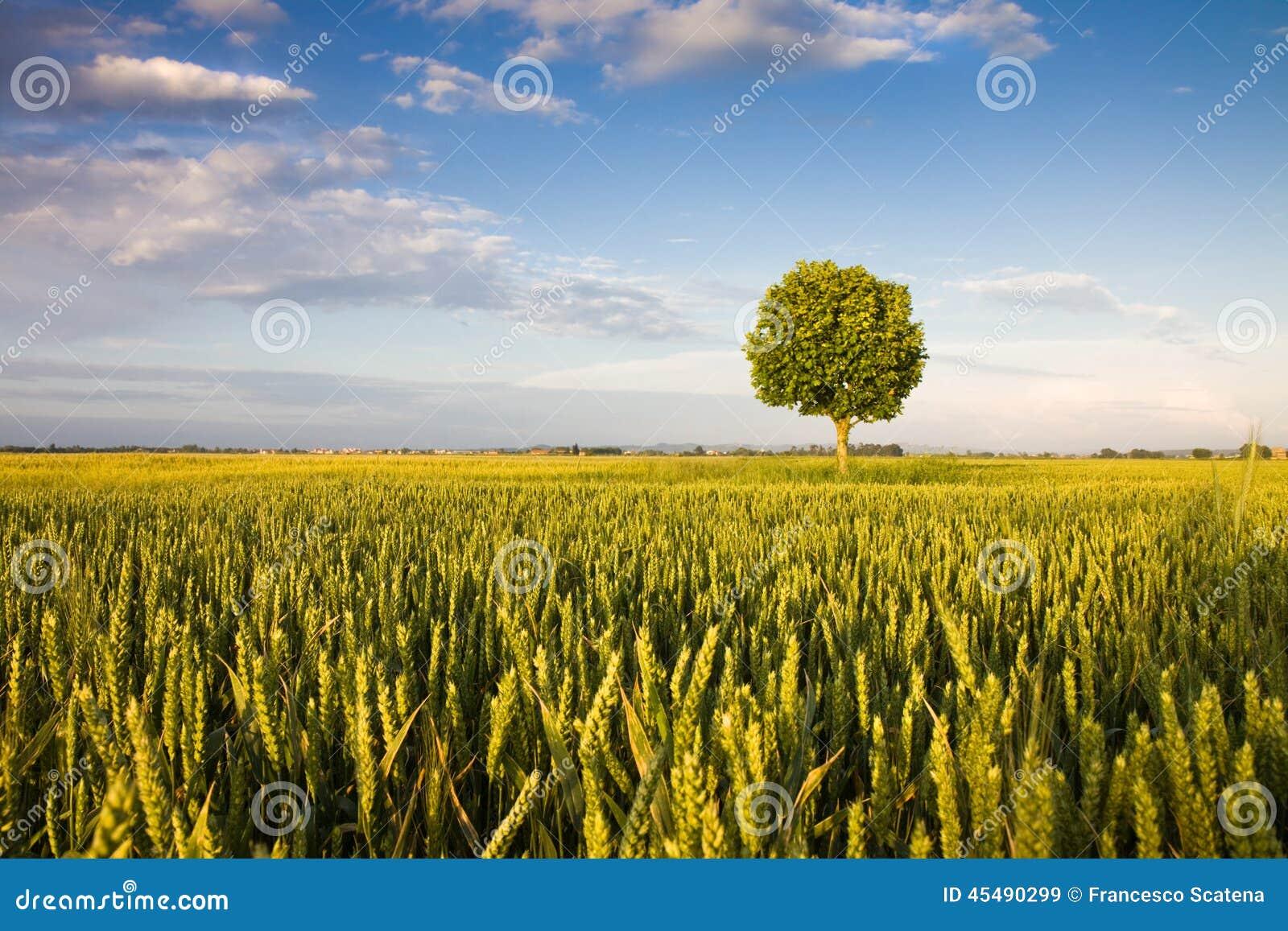 孤零零结构树