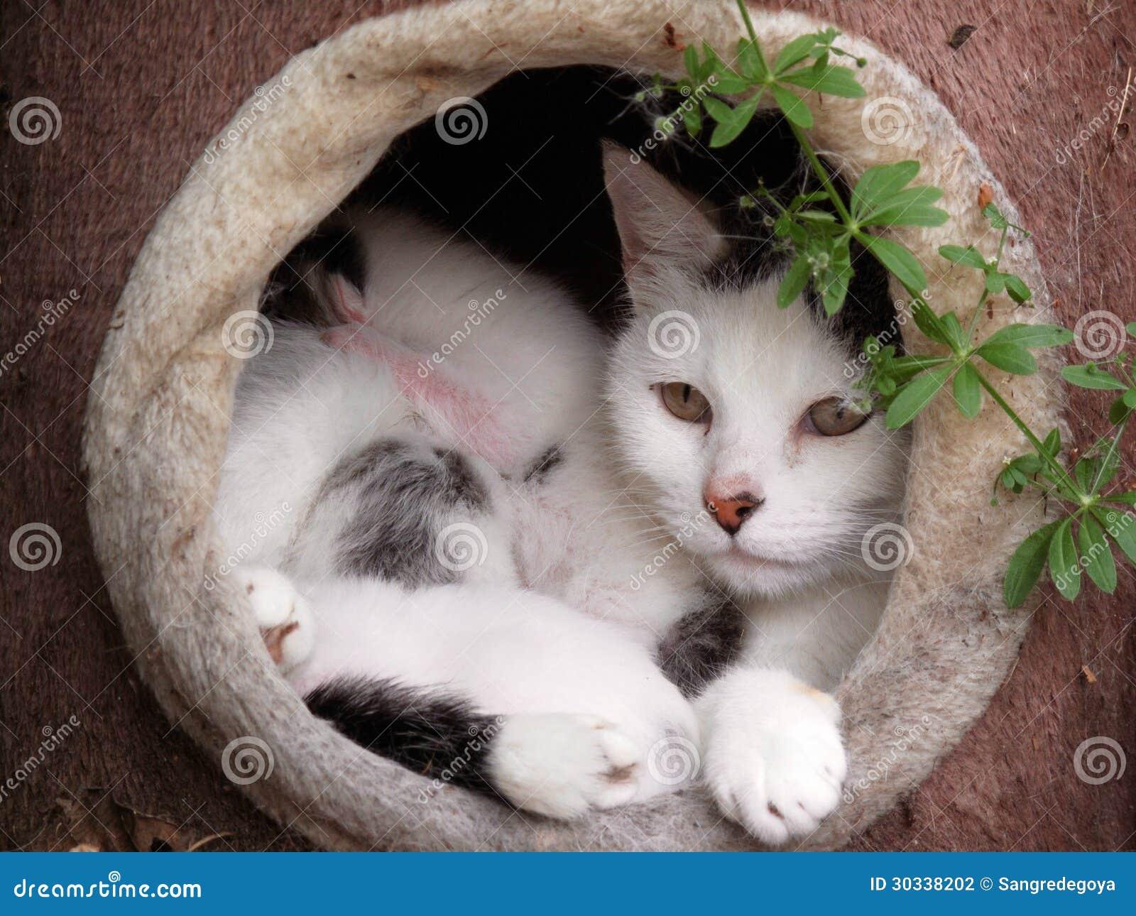 婴孩妈妈Cat和