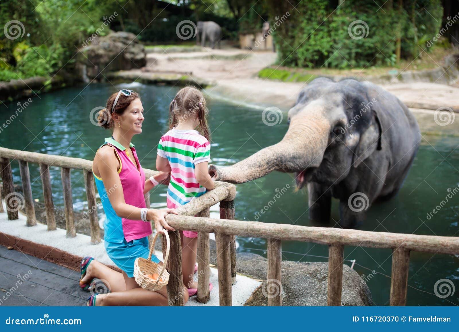 孩子饲料大象在动物园里 在野生动物园的家庭
