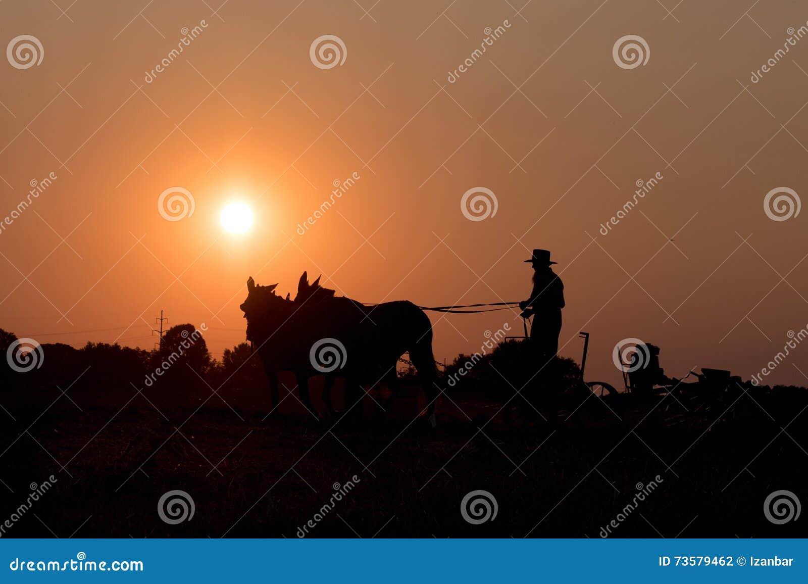 安曼人,当种田与马在日落时