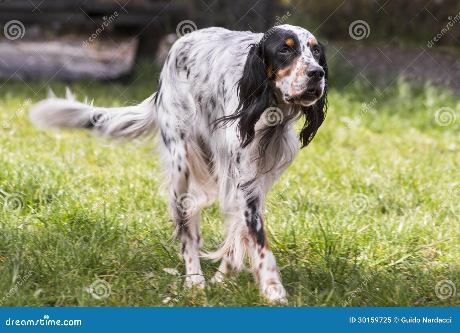 狗的种类傹.���/_安装员狗品种