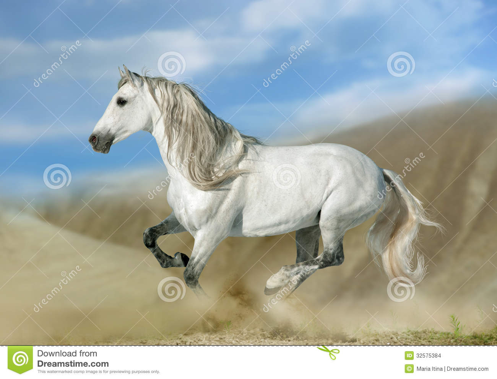 安达卢西亚马图片_安达卢西亚的公马在沙漠