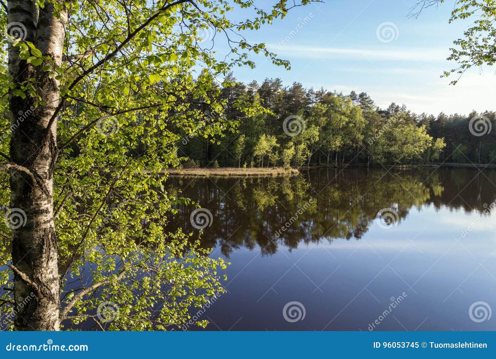 安静和镇静森林的湖和反射