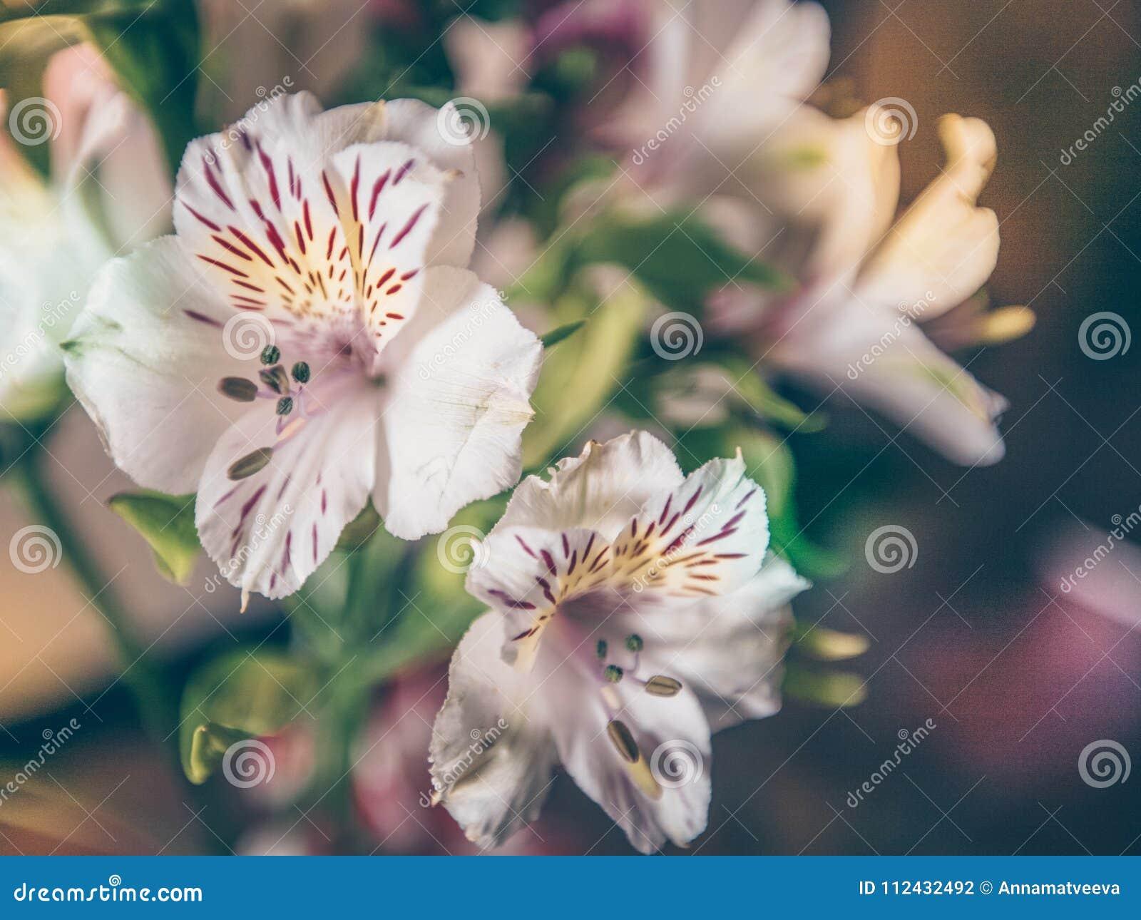 定调子花白色花束的特写镜头户内