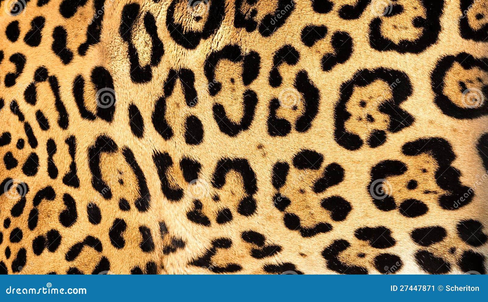 实际活捷豹汽车皮肤毛皮纹理背景