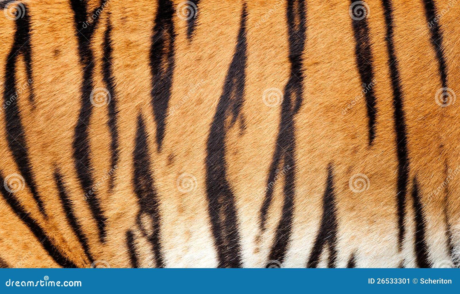 实际老虎毛皮纹理条纹图形背景