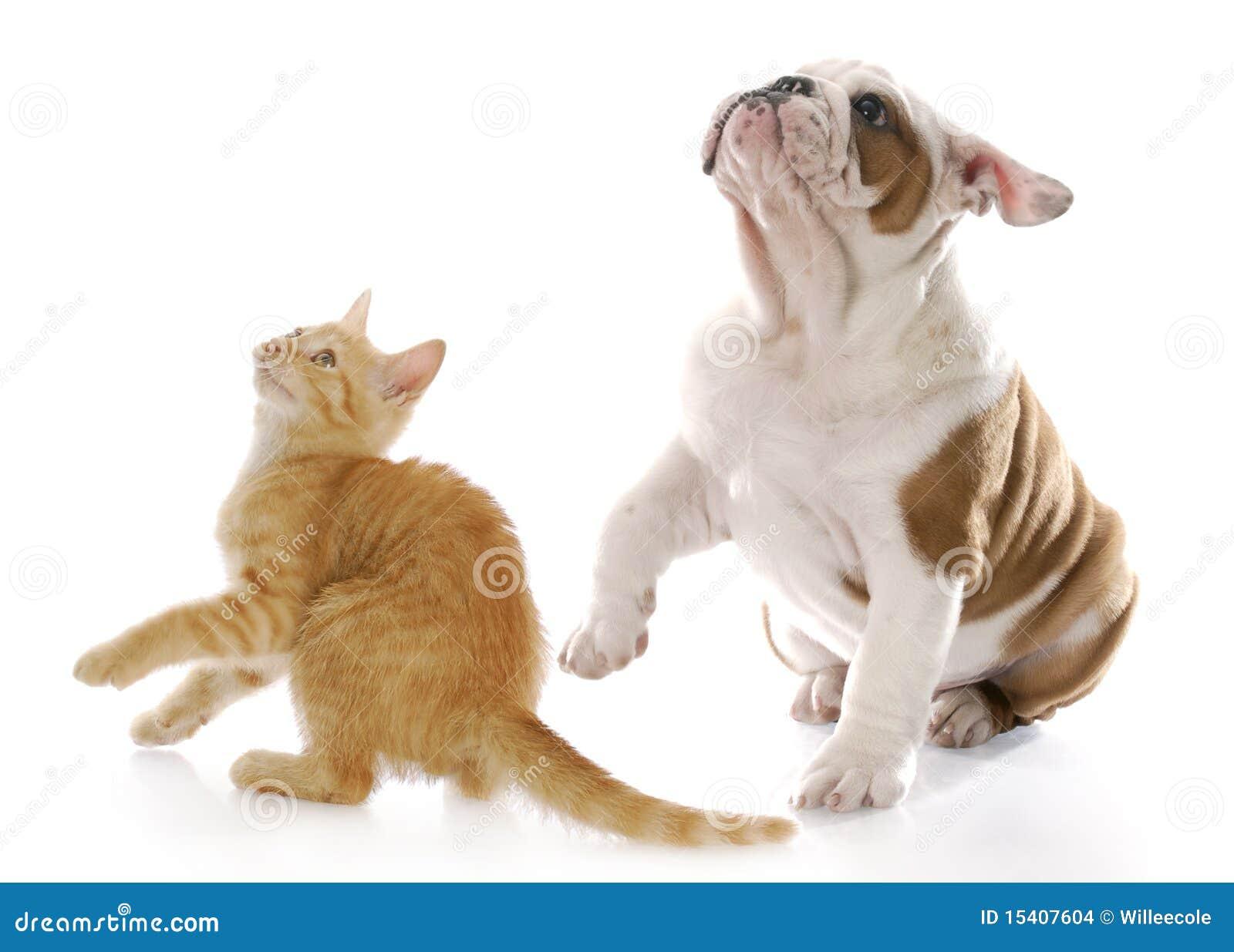 猛鬼出笼之艳鬼�y��_它脾气是最好的,不争宠,对猫家