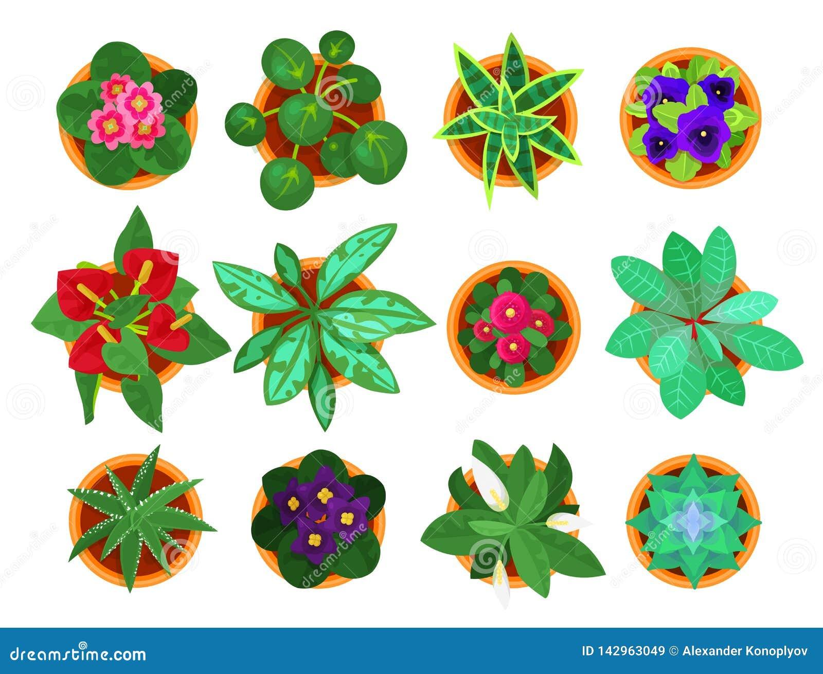 家庭植物顶视图集合,家庭内部的室内植物