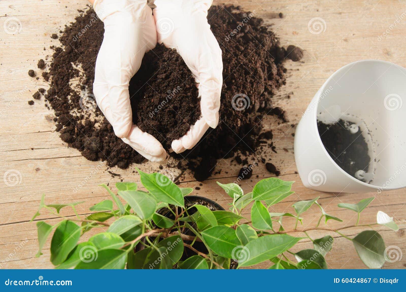 家庭从事园艺的调迁的房子植物